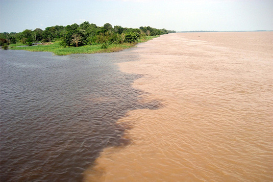 Brazil: Muddy Waters, Green Shoots, No Flowers