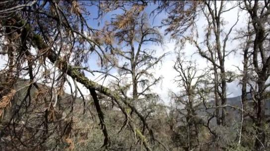 Multiple deaths after tree falls on religious gathering in Portugal
