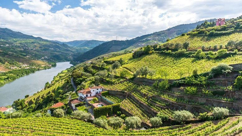 "TAP Portugal to launch ""Wine Experience"" - Business Traveller – The leading magazine for frequent flyers"