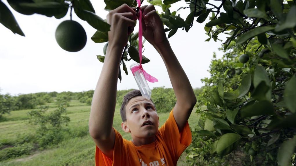 Brazil, US Identify Molecule to Help Fight Citrus Greening