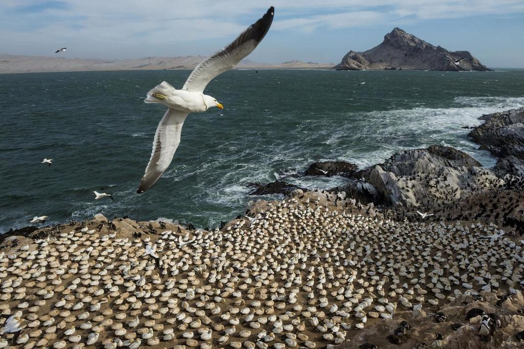 Plastic Pollution, Fish: It All Smells the Same To a Seabird
