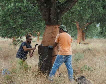 The cork harvest in Portugal — Jamie Goode's wine blog