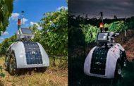 Robot created to monitor key wine vineyard parameters