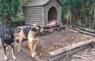 Campaigners want to free Portugal's tethered dogs