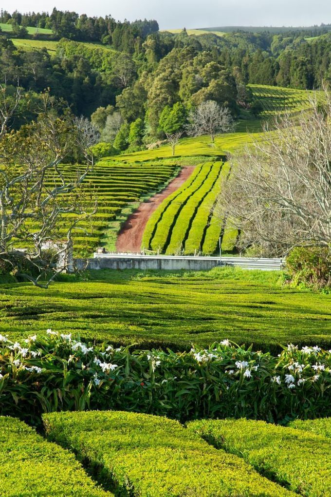 In the Azores, the menu includes coffee, tea and tradition | The Star