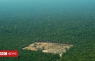 Amazon rainforest deforestation 'worst in 10 years', says Brazil