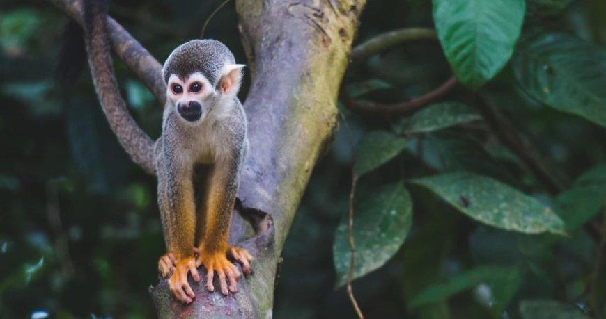 Brazil's Jair Bolsonaro puts Amazon at risk