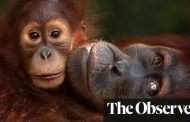 Habitat loss threatens all our futures, world leaders warned | World news | The Guardian