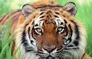 Portugal Bans Wild Animal Circuses