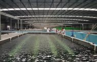 Chinese group and Angolan partner launch fish farming project –