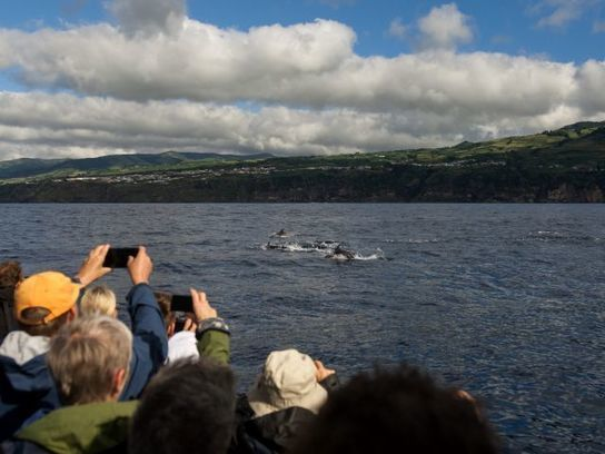 Azores suspends issuance of new whale-watching licenses on five islands - The Portugal News