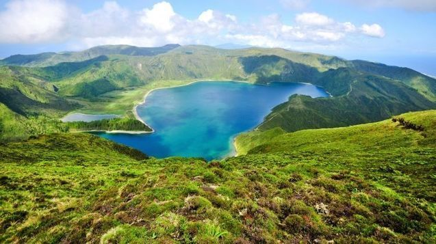 Whale watching & Swimming with dolphins in Azores