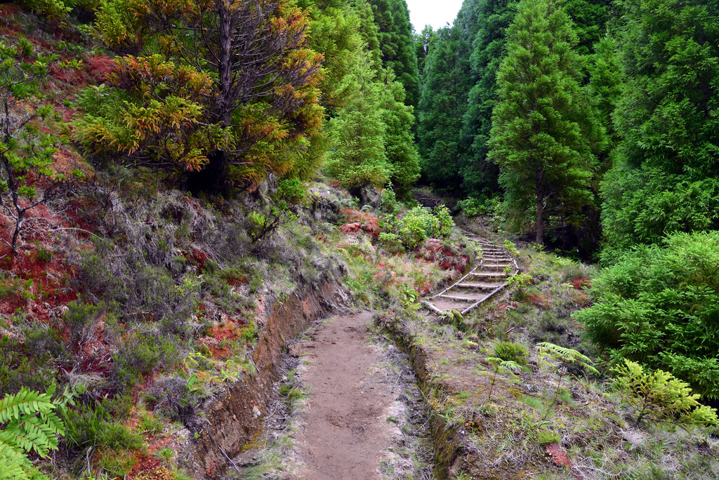 Cloud Forest: The Magic of the Laurisilva Forests in the Azores –