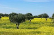 Omics Ensure the Authenticity of Portuguese Olive Oils