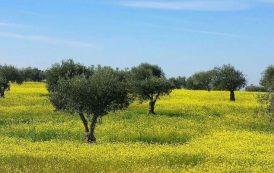 Omics Ensure the Authenticity of Portuguese Olive Oils