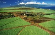 Sugar Museum, Maui, Hawaii: The surprising role sugarcane play in Hawaii's history -