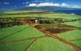 Sugar Museum, Maui, Hawaii: The surprising role sugarcane play in Hawaii's history - the Portuguese and Azorean connection