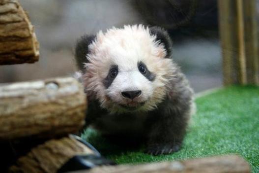 EU states adopt 'panda bonds' in Chinese outreach - Portugal latest -