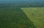 Amazon destruction accelerates 60% to one and a half soccer fields every minute -