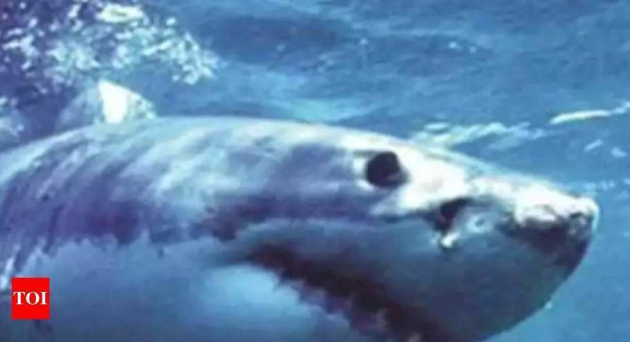 Greenpeace sounds alarm about North Atlantic shark fishing - Times of India