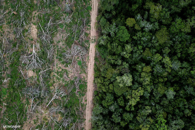 Satellite data suggests deforestation on the rise in Brazil