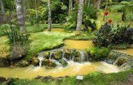 Exploring the Green Azores: Europe's Subtropical Garden - IL -