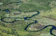 The Amazon burns. But another part of Brazil is being destroyed faster -