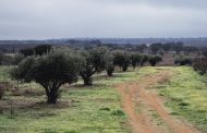 Portugal May Be the Third-largest Olive Oil Producer by 2030 -