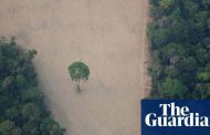 Brazil scales back environmental enforcement amid coronavirus outbreak | World news | The Guardian -