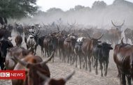 Chad 'repaying $100m debt to Angola with cattle' -