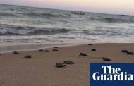 Endangered sea turtles hatch on Brazil's deserted beaches | Environment |