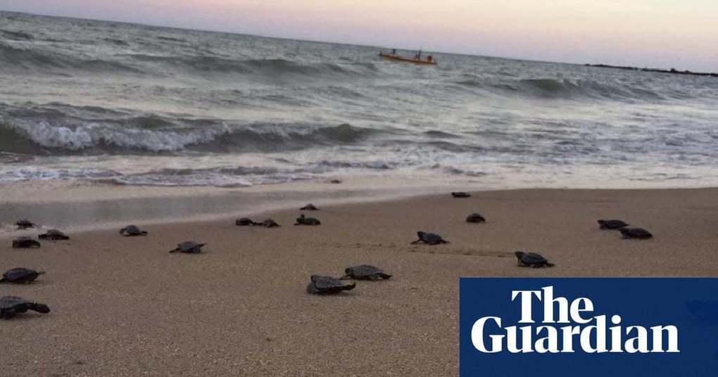 Endangered sea turtles hatch on Brazil's deserted beaches | Environment |