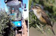 Mechanized Olive Farming Killing Millions of Songbirds Every Year -