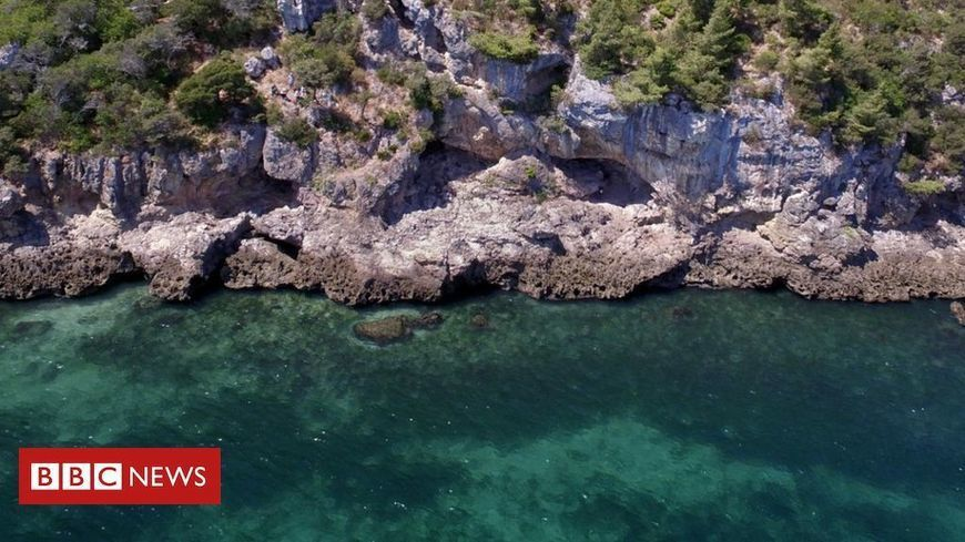 Neanderthals ate sharks and dolphins in present day Portugal