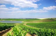 Sustainability efforts in Portugal's Alentejo wine region -