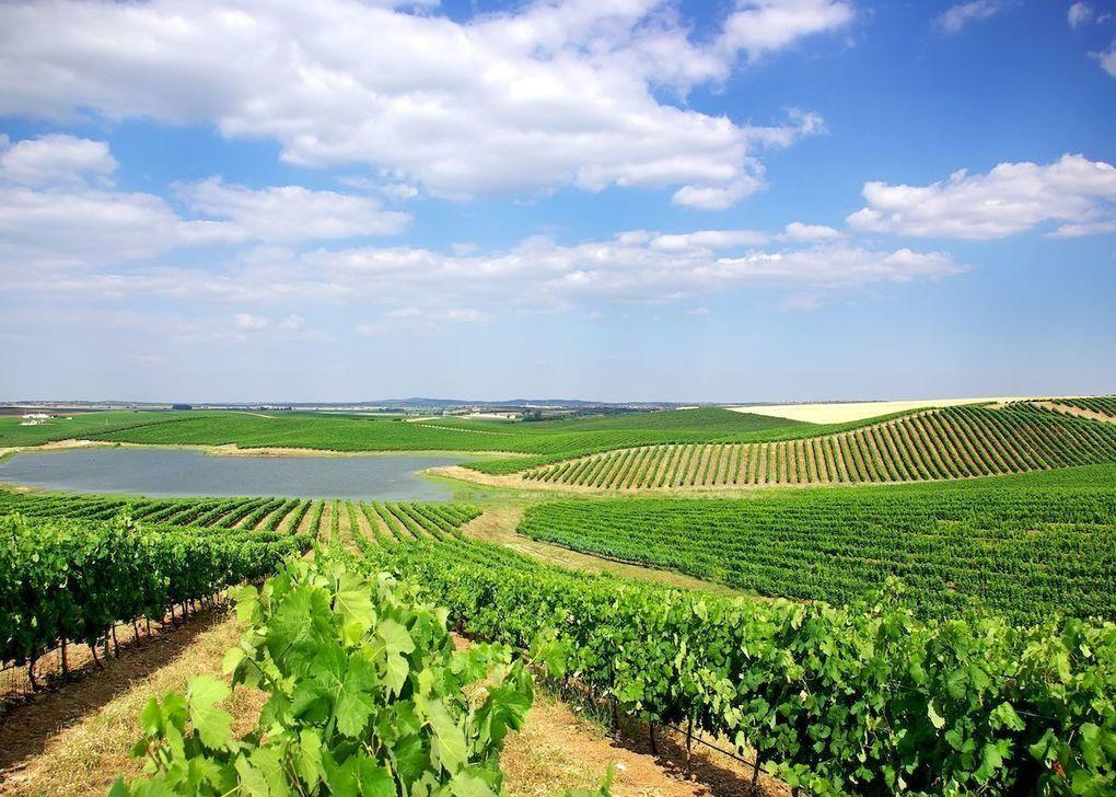 Sustainability efforts in Portugal's Alentejo wine region -