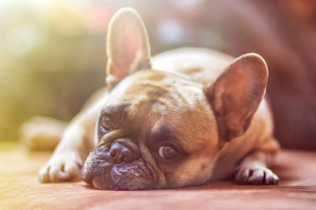 Portuguese study identifies last-line antibiotic resistance in humans and pet dog -