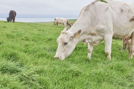 Study traces spread of early dairy farming across Western Europe -