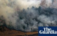 Football pitch-sized area of tropical rainforest lost every six seconds | Environment | The Guardian -