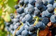 Non-EU Markets Boost Portuguese Wine Exports In First Quarter -