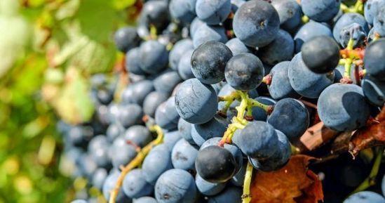 Non-EU Markets Boost Portuguese Wine Exports In First Quarter -