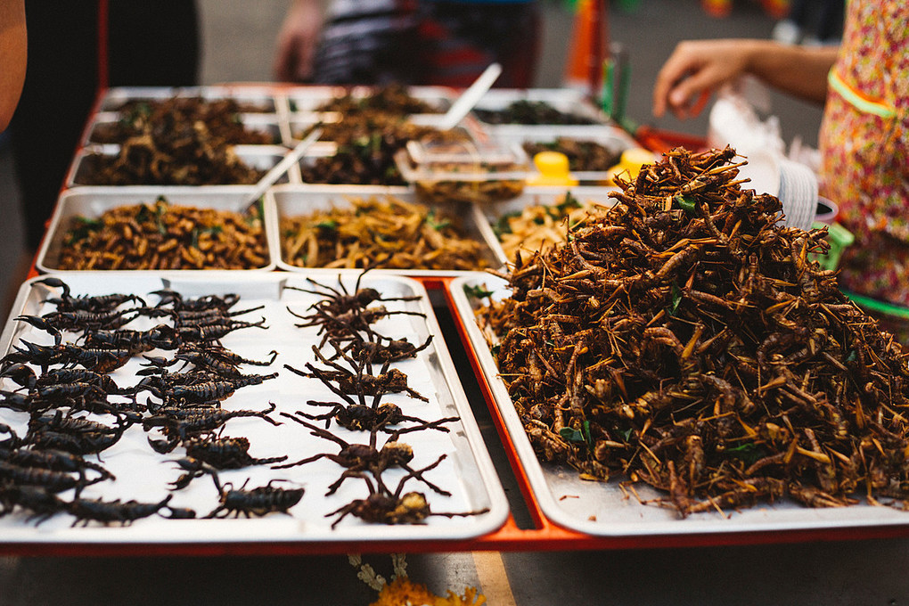 Survey Shows People Would Rather Eat Plants Than Insects -