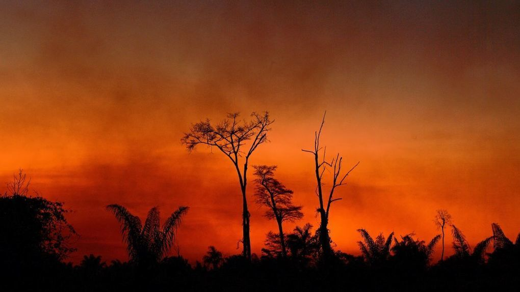 Deforestation in the Brazilian Amazon is Soaring -