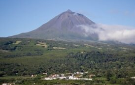 Wine production is ever more central to the Pico Island economy |