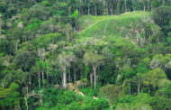 Scientists unravel how and why Amazon trees die -