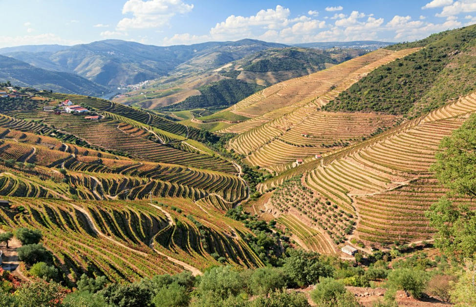 Top 15 Portuguese red wines -