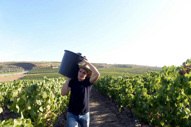 Interview: Portuguese wines vying to crack China market - Xinhua |