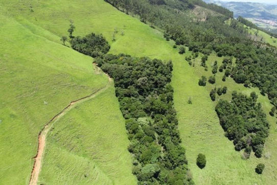 Brazil's Forests Are Being Restored — Now We Can See Where -