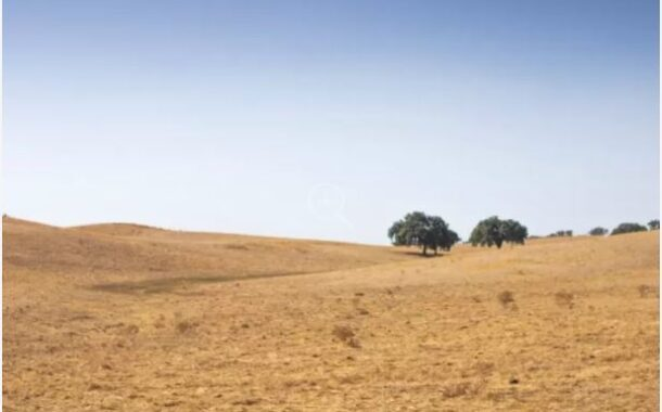 Biodiversity falls in Portugal in flora, fish and birds -